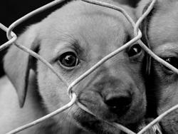abused dog