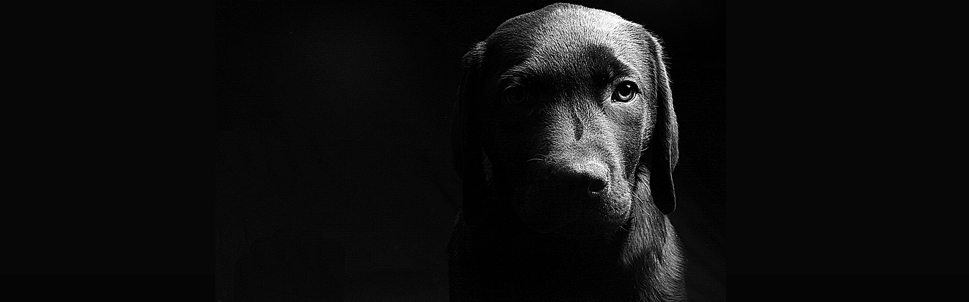 animal welfare cruelty rehabilitation