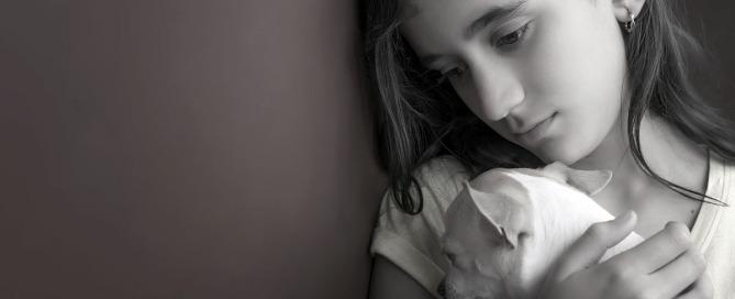 domestic and animal abuse