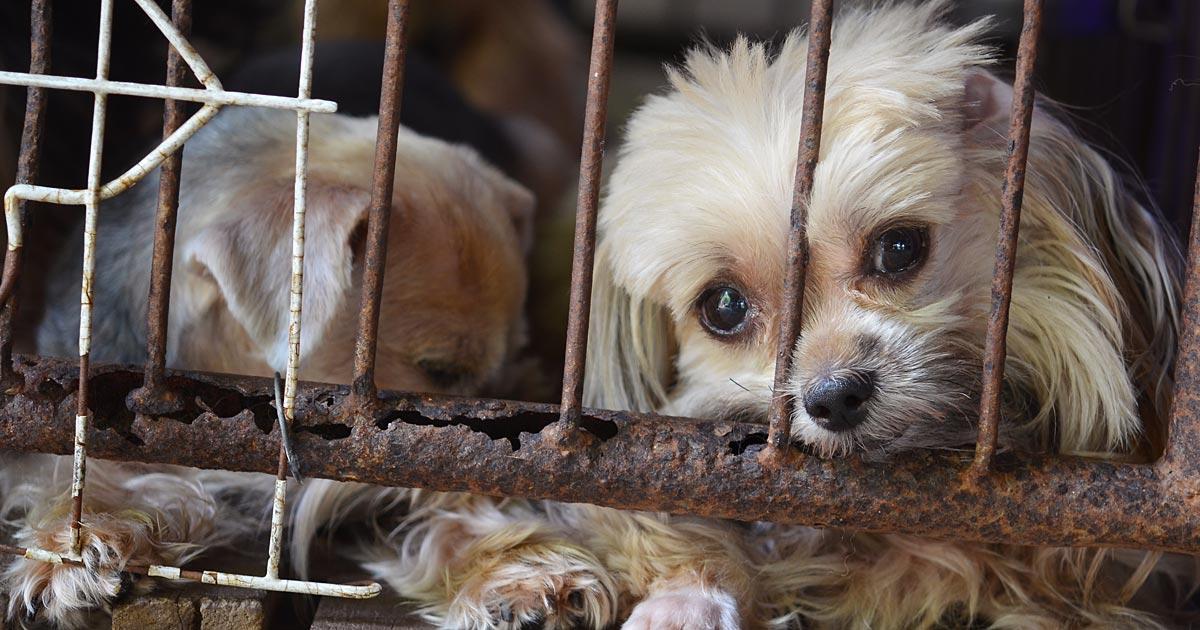 how to report animal cruelty