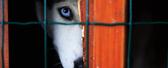fbi crime reports on animal cruelty
