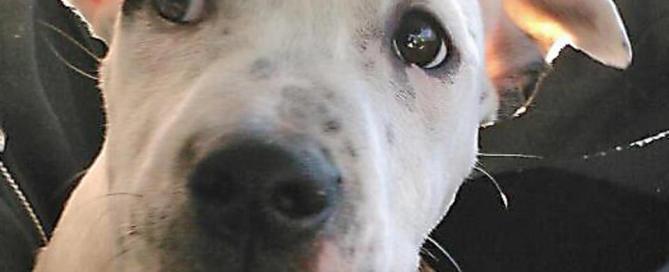 puppy Doe - Massachusetts animal cruelty case