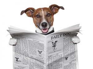 how to write anti animal abuse letters to the editor
