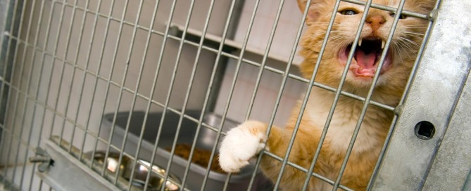 animal cruelty in pet stores