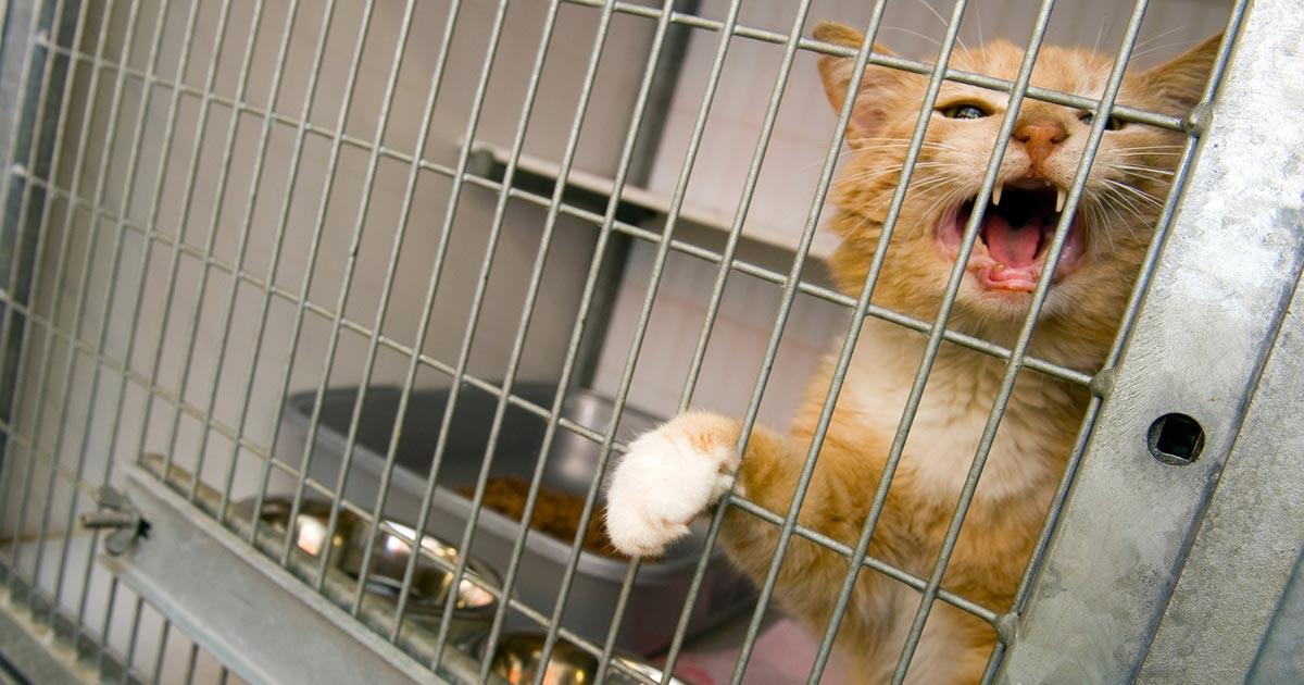 animal cruelty in pet stores