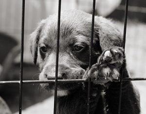 pet stores animal cruelty